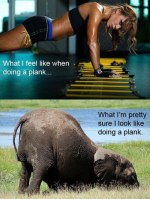Plank and Hold tight No Matter What You Feel it Looks Like!